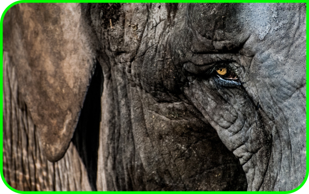 Evernote elephant Mac Aficionados